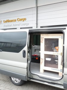 Pet Transport Air Road